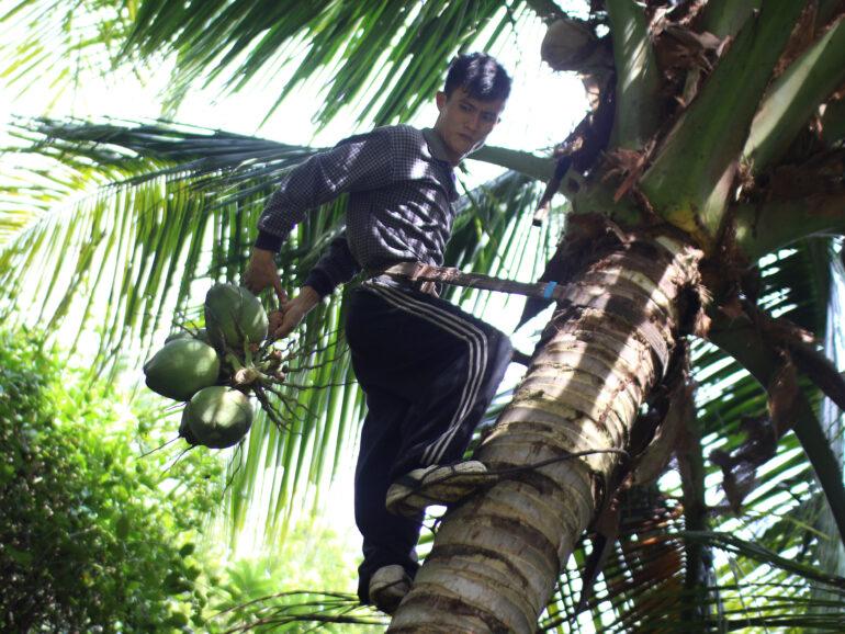 Dongjiao Coconut Grove